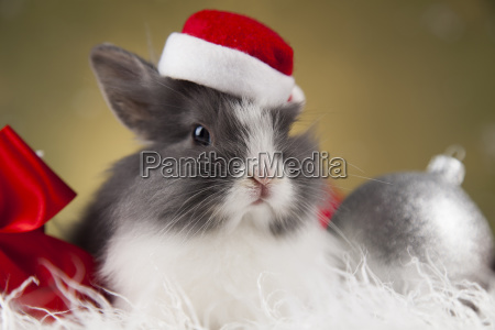 little, bunny, funny, rabbit, on, christmas, background - 25314540