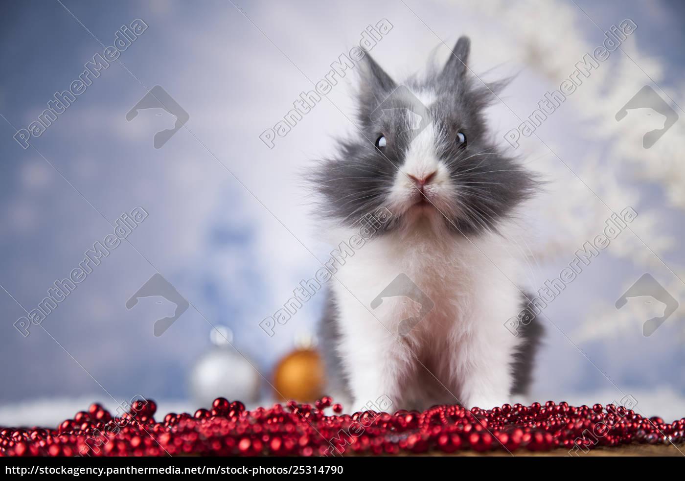 little, bunny, funny, rabbit, on, christmas, background - 25314790