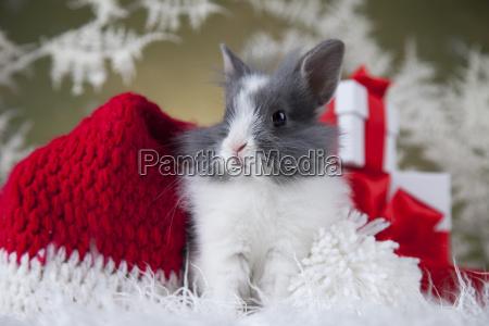 little, santa, bunny, on, christmas, background - 25314430