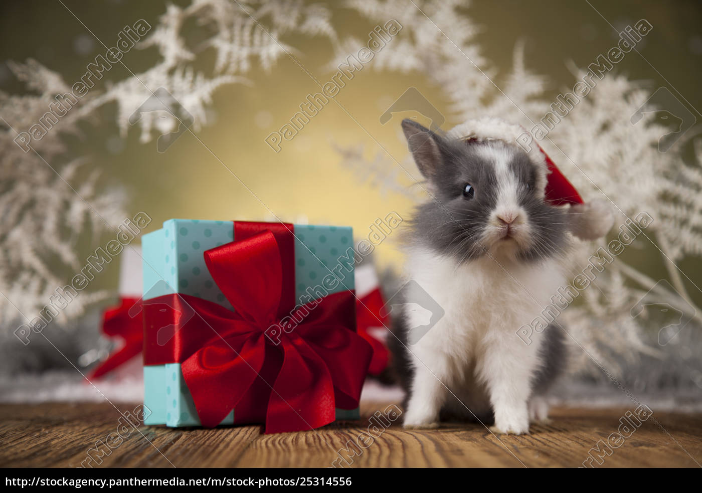 little, santa, bunny, on, christmas, background - 25314556