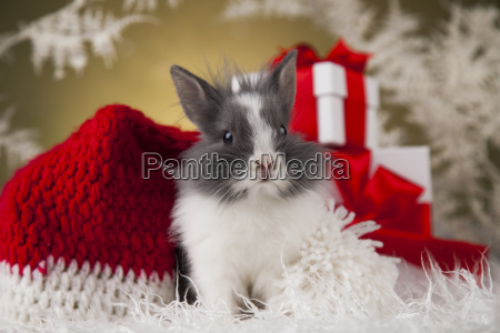 little, santa, bunny, on, christmas, background - 25314888