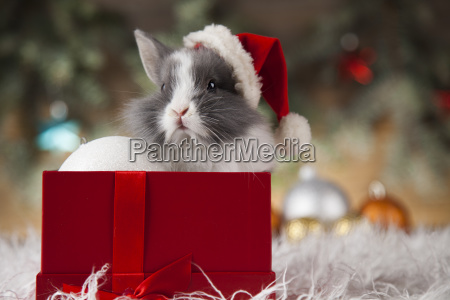 animal, , rabbit, , bunny, on, christmas, background - 25315326