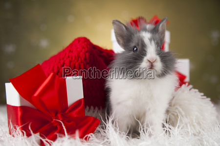 christmas, bunny, , santa, baby, red, hat - 25315090