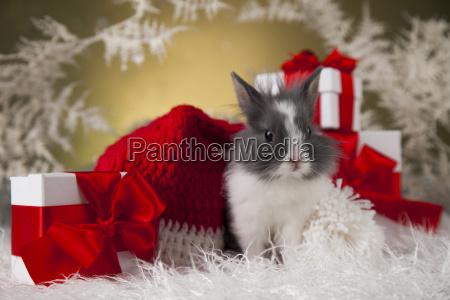 christmas, bunny, , santa, baby, red, hat - 25315270