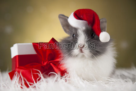 holiday, christmas, bunny, in, santa, hat - 25315226