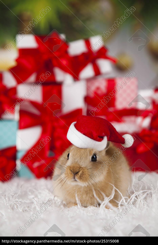 little, bunny, funny, rabbit, on, christmas, background - 25315008