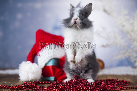 little, bunny, funny, rabbit, on, christmas, background - 25315022
