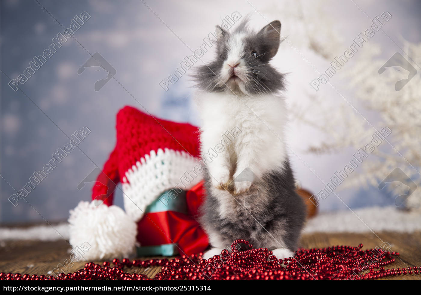 little, bunny, funny, rabbit, on, christmas, background - 25315314