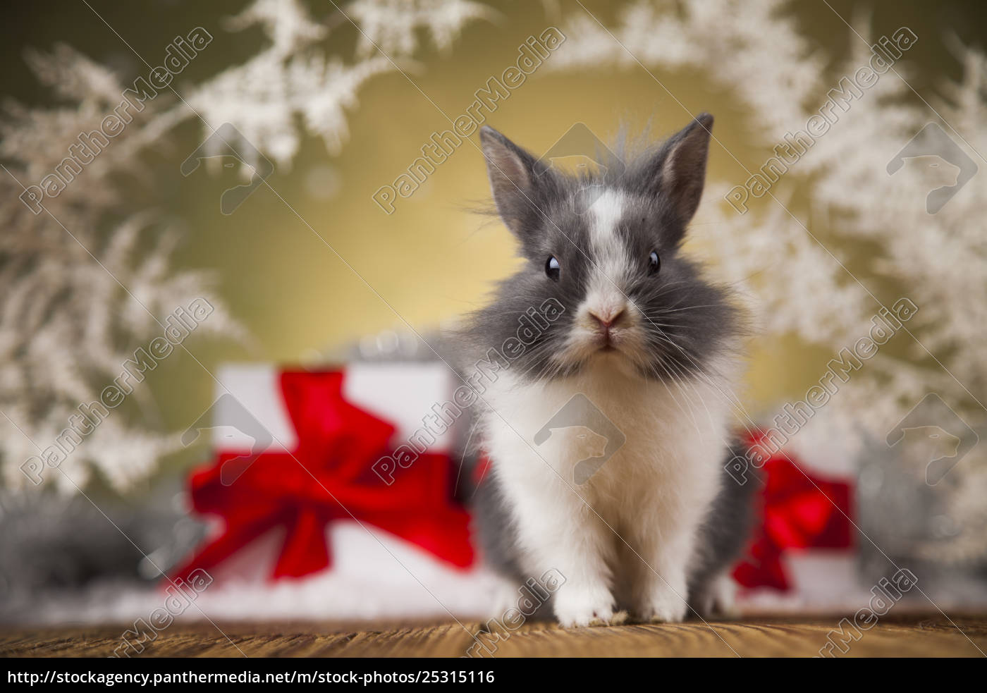 little, santa, bunny, on, christmas, background - 25315116