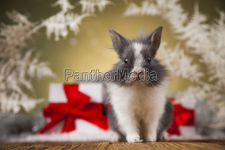 little, santa, bunny, on, christmas, background - 25315116