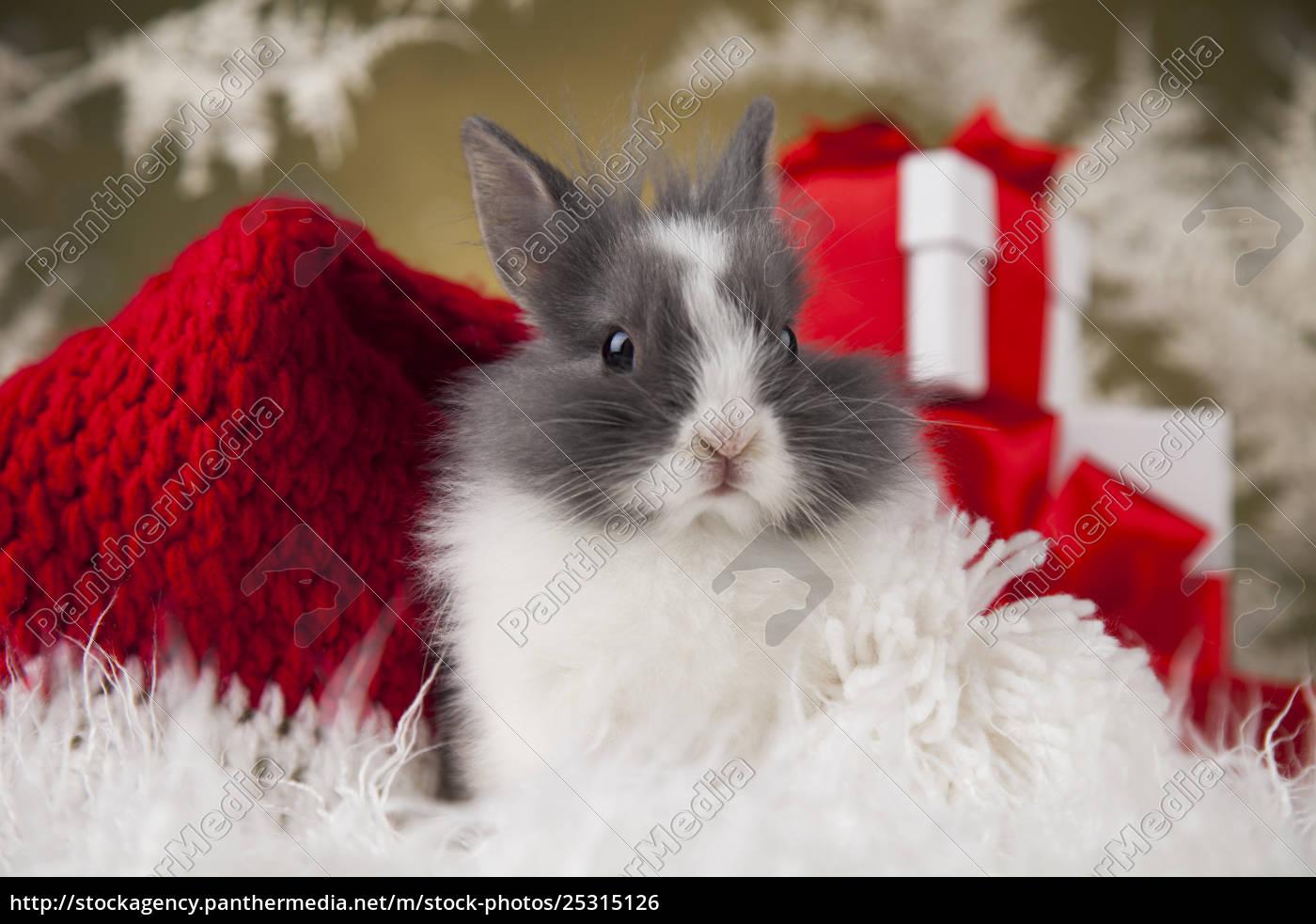 little, santa, bunny, on, christmas, background - 25315126