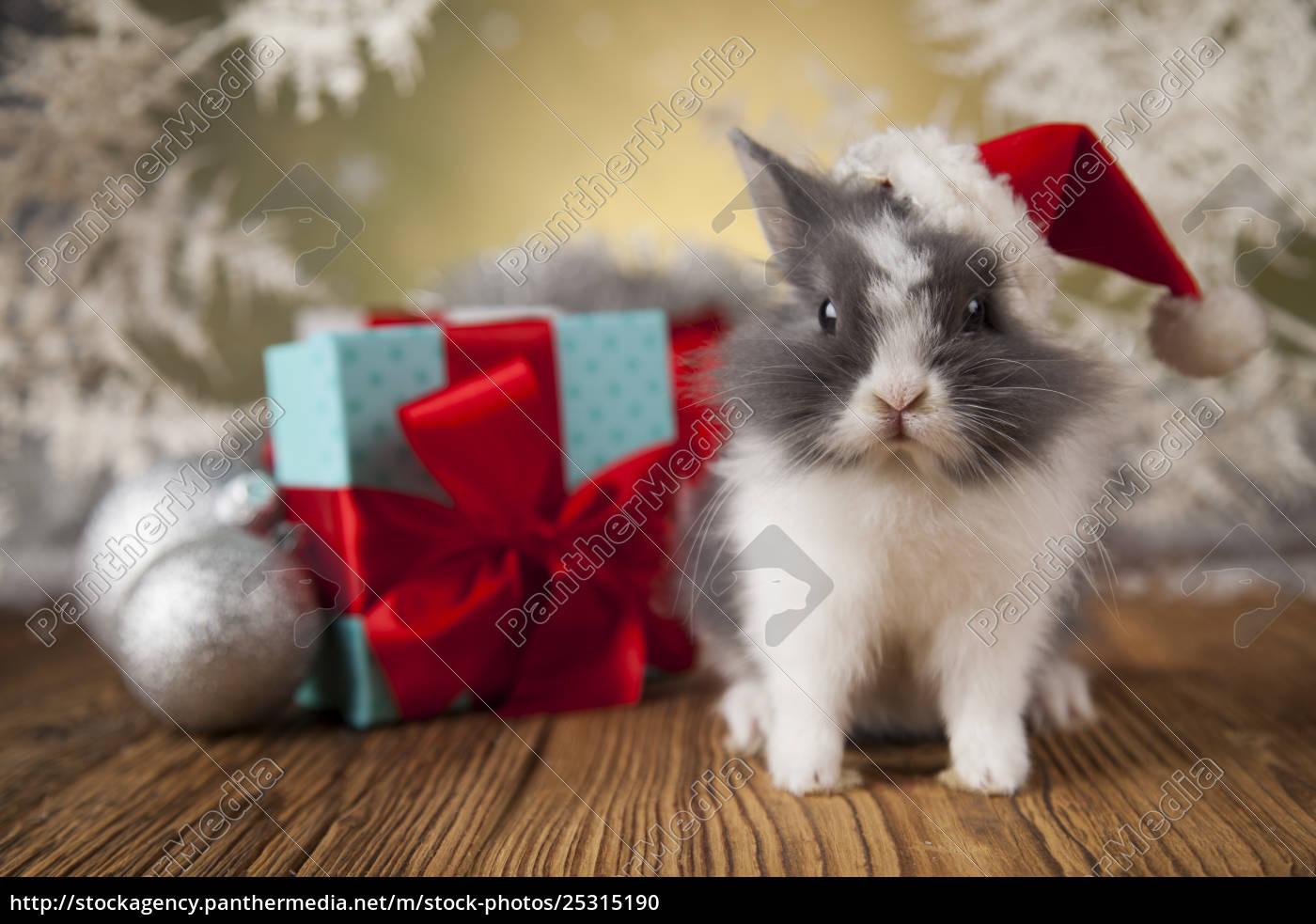 little, santa, bunny, on, christmas, background - 25315190