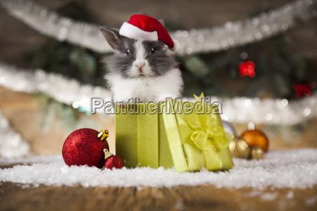 christmas, bunny, , santa, baby, red, hat - 25318540