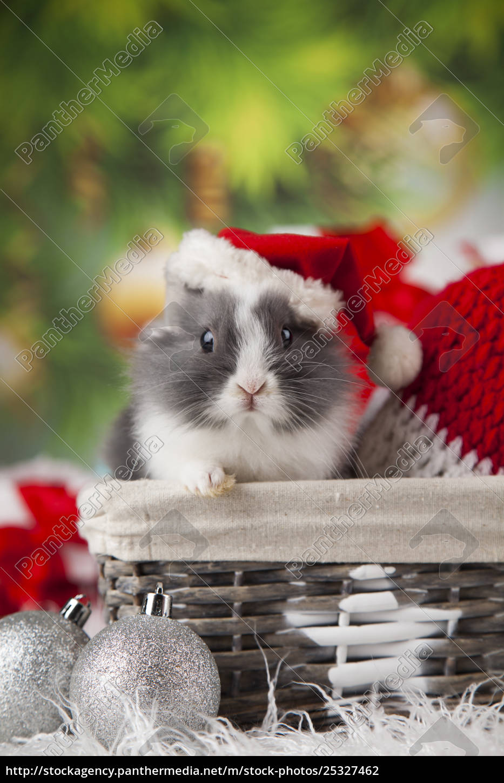 holiday, christmas, bunny, in, santa, hat - 25327462