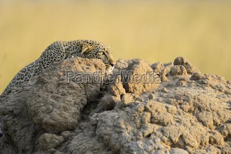 mammal fauna national park africa kenya