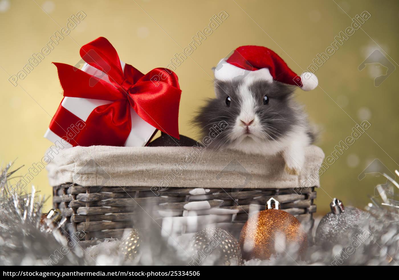 animal, , rabbit, , bunny, on, christmas, background - 25334506