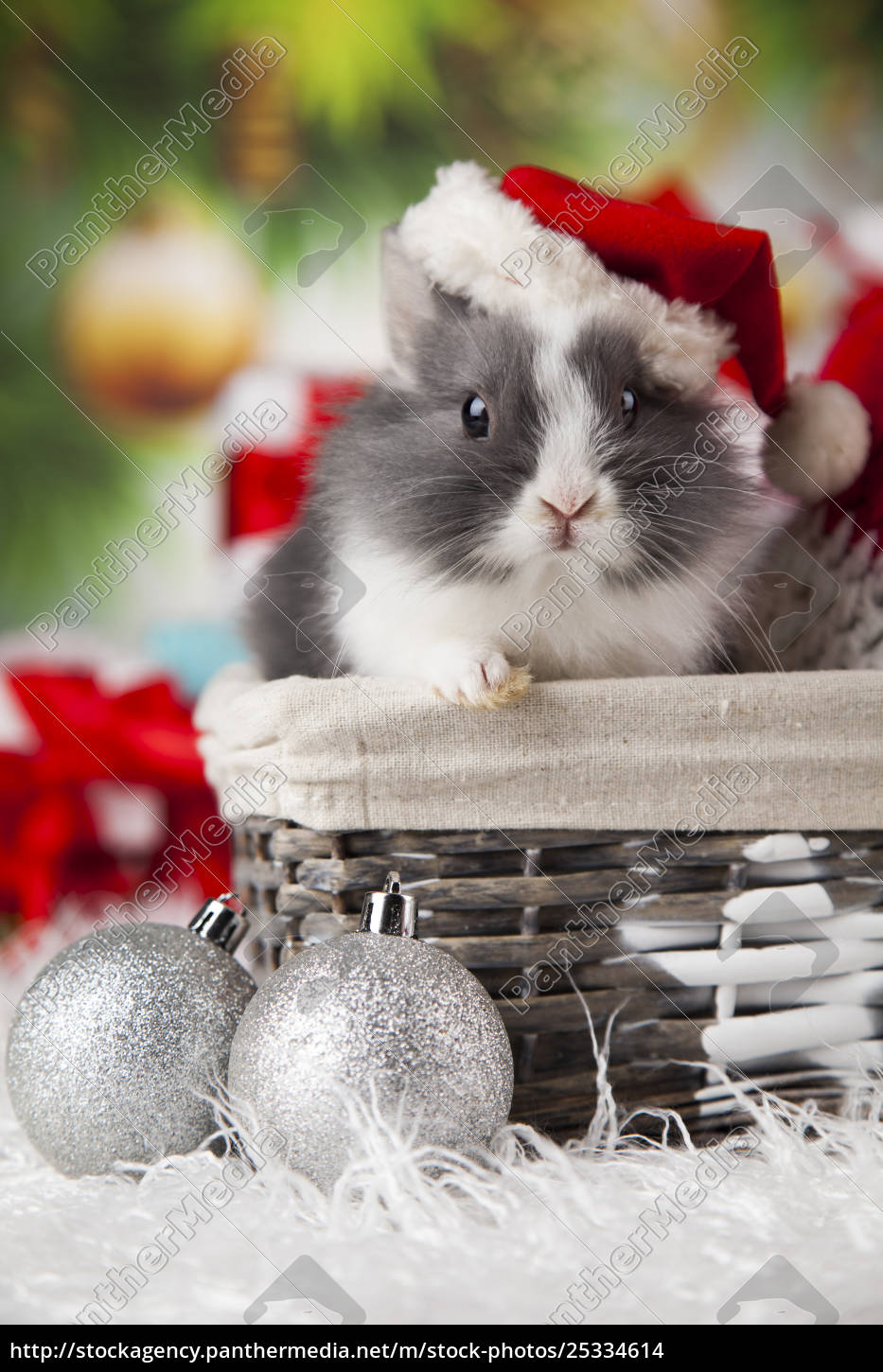 animal, , rabbit, , bunny, on, christmas, background - 25334614