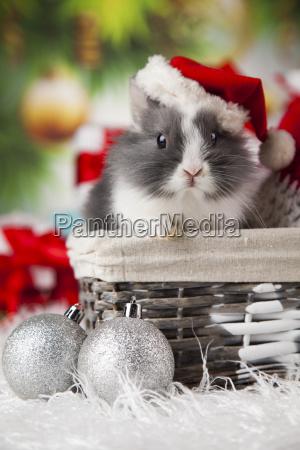 animal, , rabbit, , bunny, on, christmas, background - 25334614