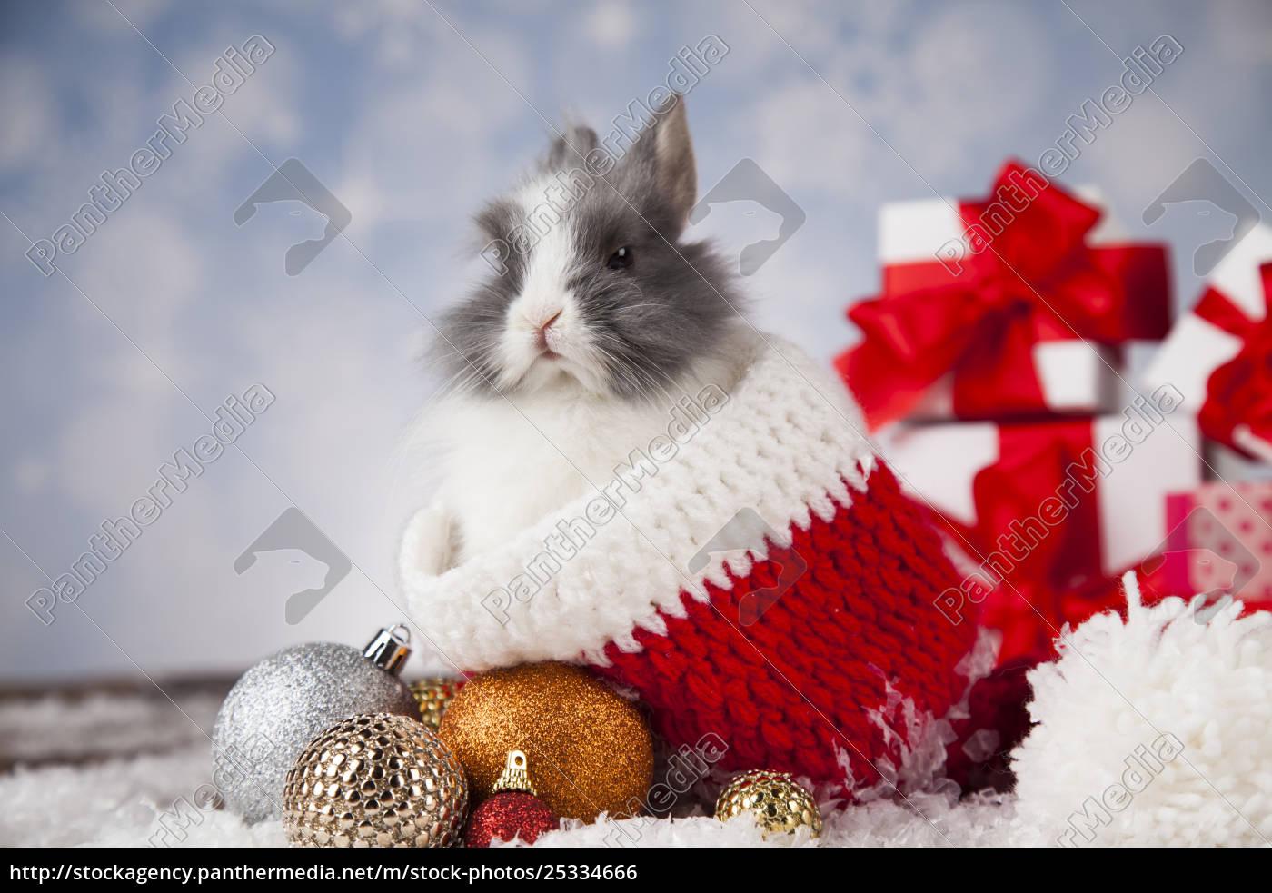 holiday, christmas, bunny, in, santa, hat - 25334666