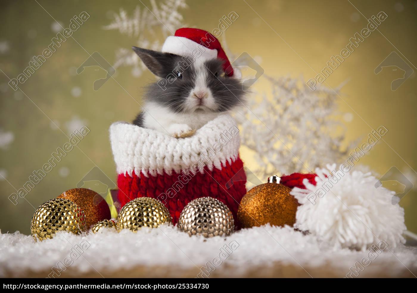 little, bunny, funny, rabbit, on, christmas, background - 25334730