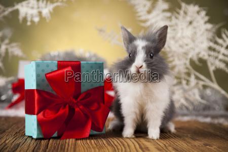 little, santa, bunny, on, christmas, background - 25334718