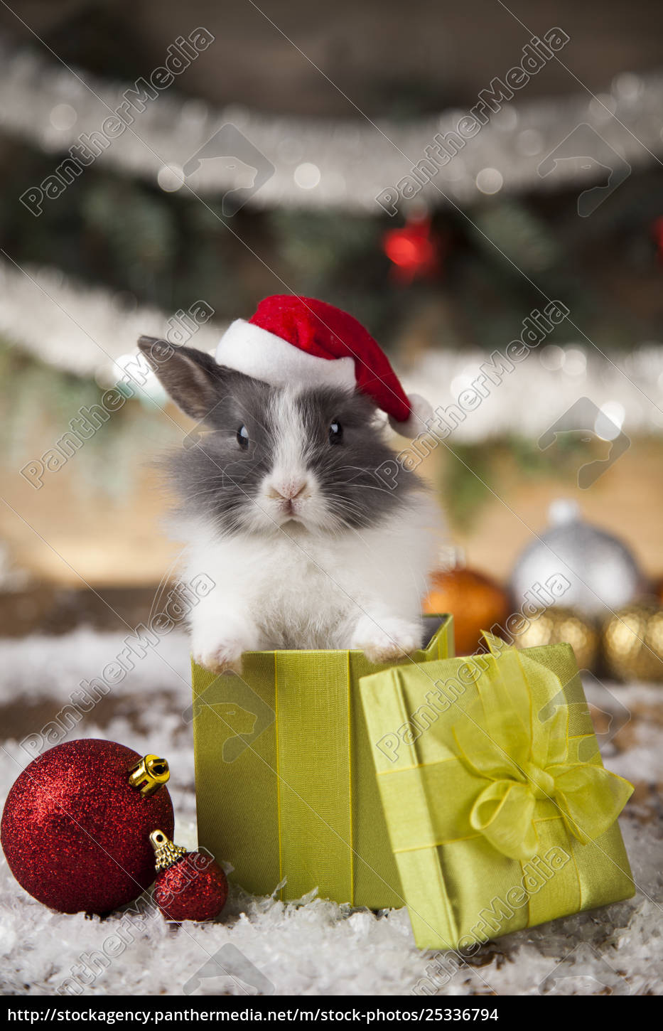 holiday, christmas, bunny, in, santa, hat - 25336794