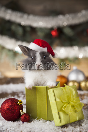 holiday, christmas, bunny, in, santa, hat - 25336794