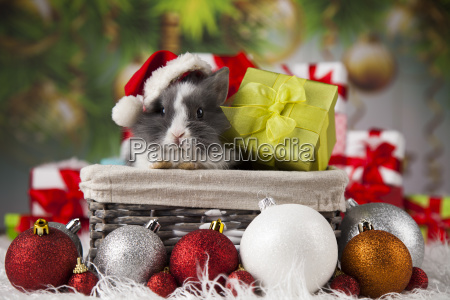 little, bunny, funny, rabbit, on, christmas, background - 25337442