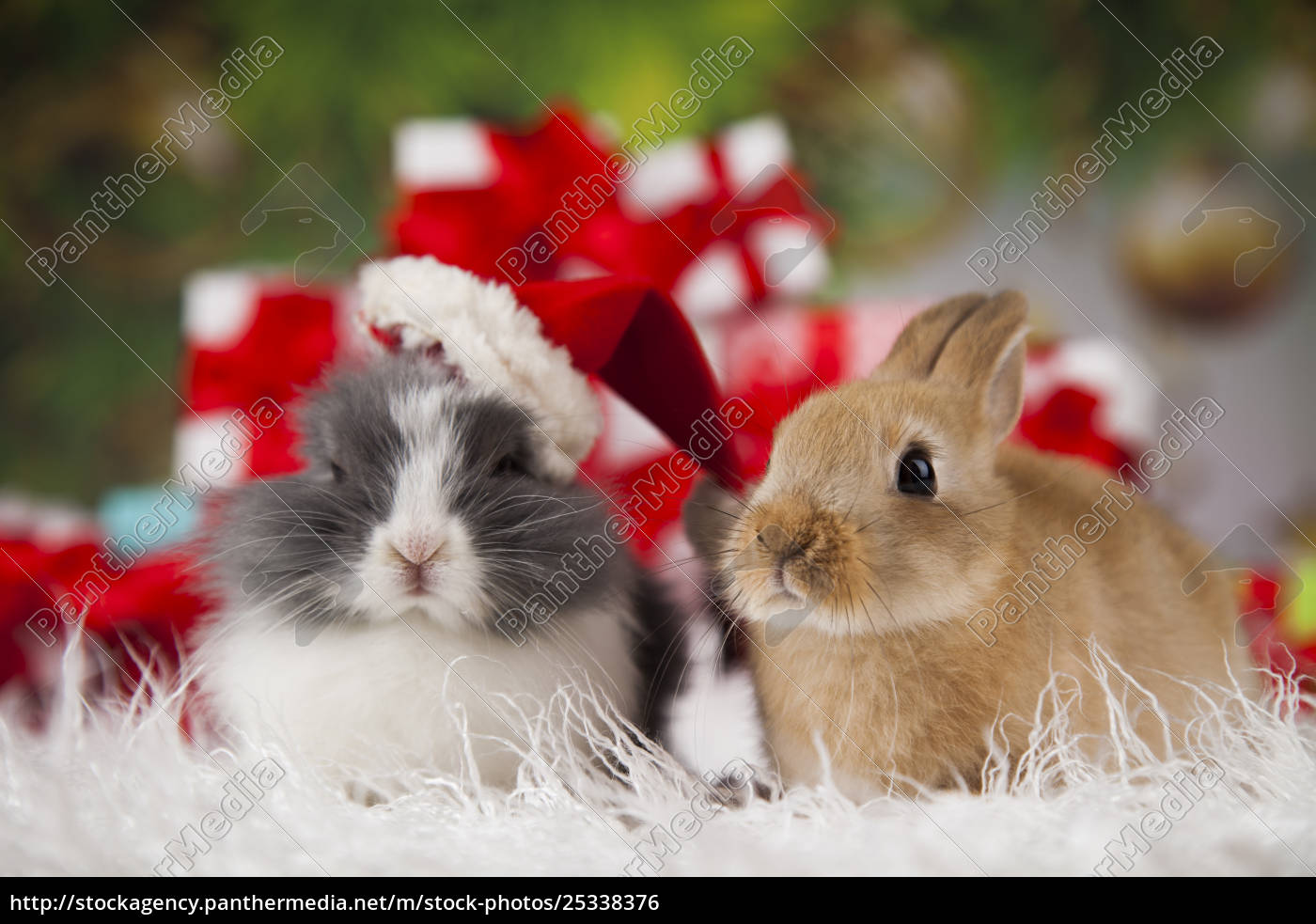 bunny, with, rabbit, , christmas, red, santa - 25338376