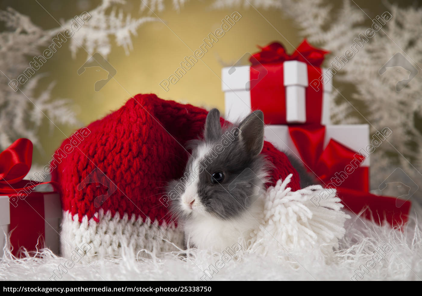 christmas, bunny, , santa, baby, red, hat - 25338750