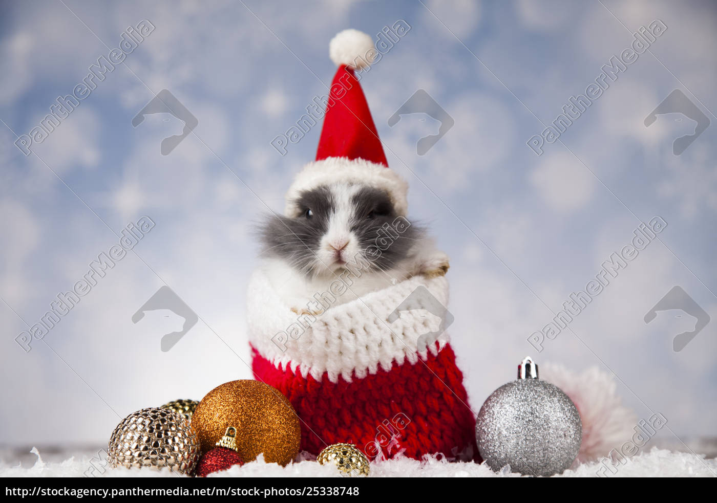 holiday, christmas, bunny, in, santa, hat - 25338748