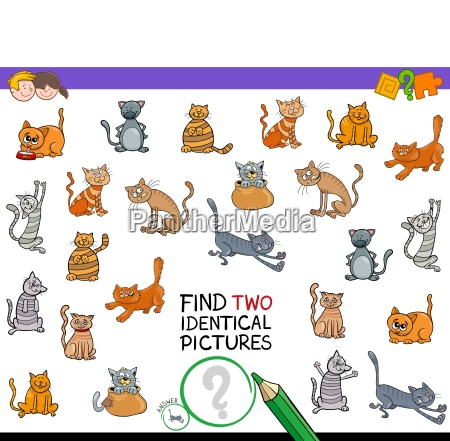find two identical cat pictures game