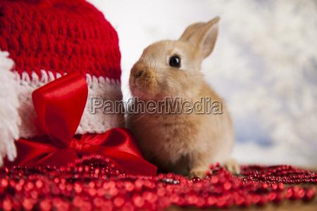 animal, , rabbit, , bunny, on, christmas, background - 25340402