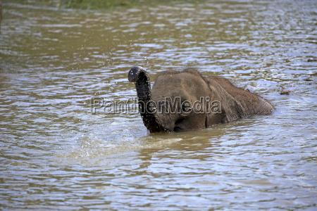 drink drinking bibs waters fauna national