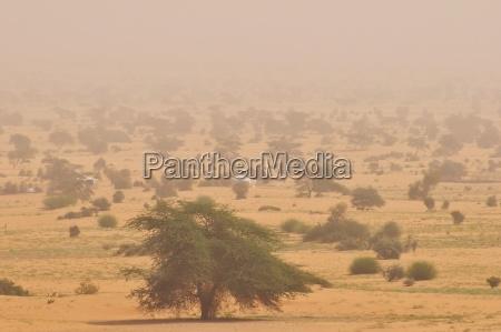 bucolic tree trees desert wasteland distance
