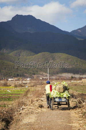 chinese farmer moves cart of vegetables