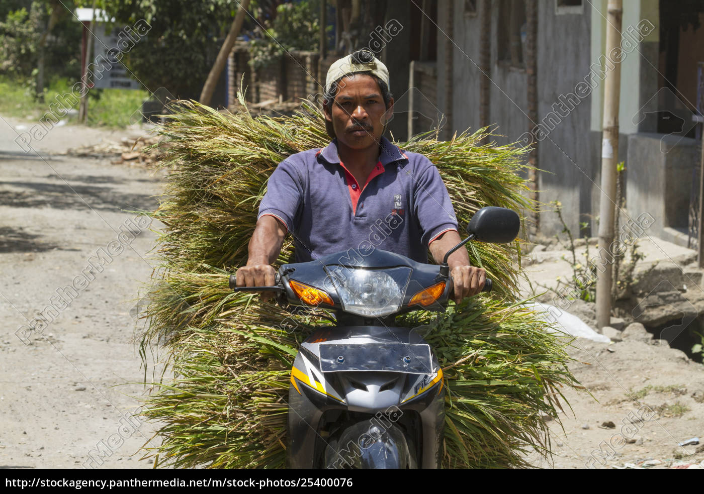 man, on, a, motorcycle, carrying, grass, - 25400076