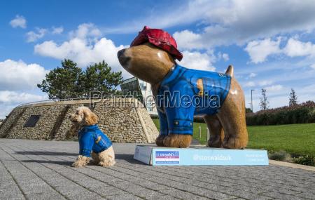 a dog wearing a blue coat