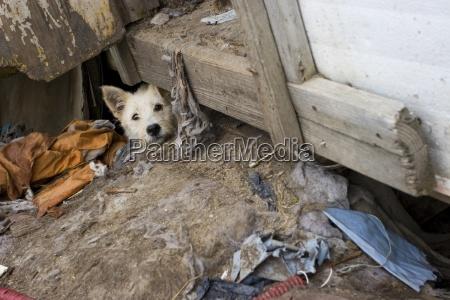 stray dog hiding alberta canada