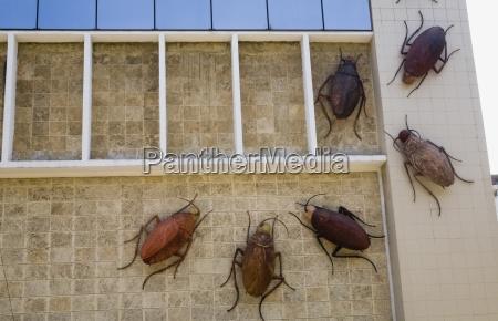 cockroach art display havana cuba