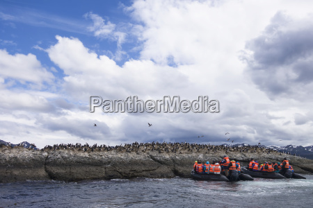 tourist excursion to view magellanic penguins