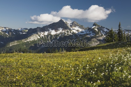 field against mountain backdrop