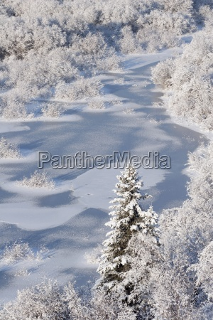 hoar frost on the elbow river