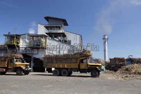 trucks loaded with raw sugar cane