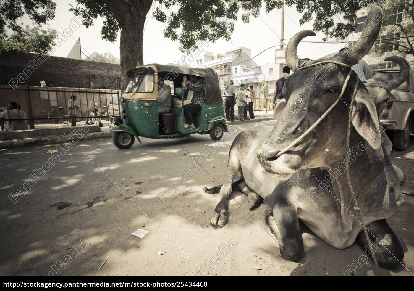 Rights-managed image 25434460 - A Rickshaw And A Holy Cow In The Street  Delhi India