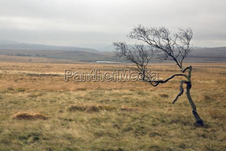a lone tree in a barren