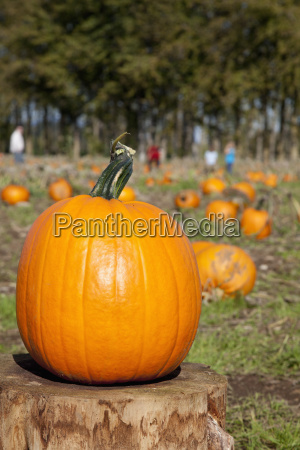 perfect pumpkin sits on a tree