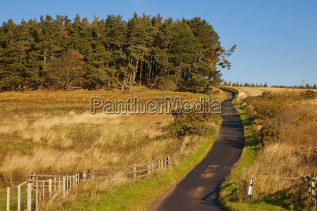 a rural road in autumn northumberland