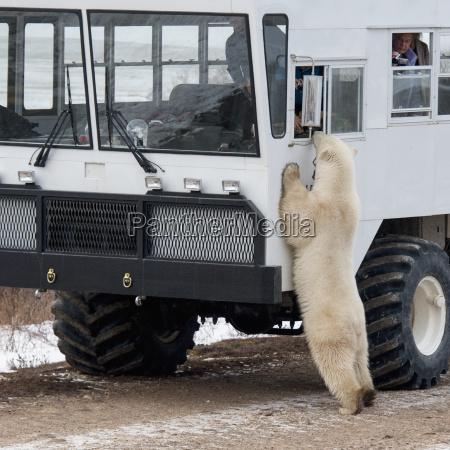 a polar bear standing against a
