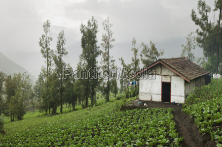 agricultural fields and a shed on